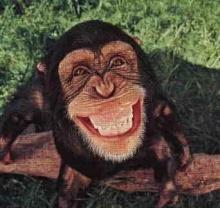 พบลิงแคเมอรูน ต้นตอแพร่เชื้อเอดส์