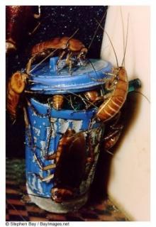 วิธีกำจัดแมลงสาบแบบบ้านๆ..สุดแสนประหยัด