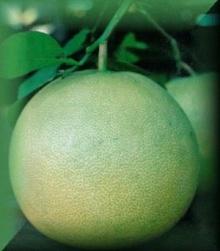 ประโยชน์ของเปลือกส้มโอ
