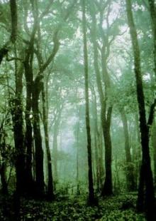 วิธีเอาตัวรอด..เมื่อหลงป่า ??