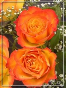 ความหมายของดอกไม้ตามวันเกิด