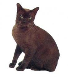 ตรวจพบเชื้อหวัด 2009 ในแมวเป็นครั้งแรก!