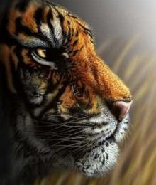 ภาพปริศนา : เสือ