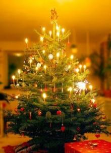 ทำไมวันคริสต์มาสต้องมีต้นสน