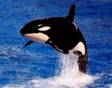 ทำไมปลาวาฬมีน้ำพุ่งอยู่บนหัว