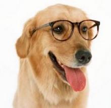 น้องหมาช่วยตรวจระดับน้ำตาลในเลือดให้คุณได้