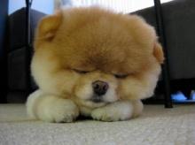 บูน้องหมาน่ารักที่สุดในโลก