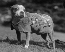 สุนัขทหาร ตัวแรกของโลก