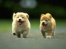 ทำไม สุนัข และ แมว ที่หลงหาทางกลับบ้านเองได้