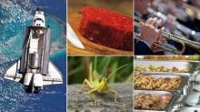 แมลง-เนื้อหลอดแก้วอาหารแห่งอนาคต? เราจะกินอะไรในอีก 20 ปีข้างหน้า