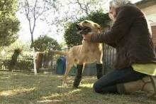 พ่อค้ายาเม็กซิโกตัดขาสุนัขเพื่อทดลองเครื่องมือผ่าตัด