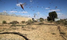ระทึก ฝูงแมลงกว่า 30 ล้านตัวอพยพจากอียิปต์บุกอิสราเอล