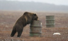 ตะลึง! พบ ฝูง หมีสีน้ำตาล ติดสารระเหย งอมแงม