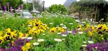 ฤดูเปลี่ยน.. ดอกไม้ก็เปลี่ยน เที่ยวหน้าฝน ตื่นตา!ดอกไม้งามที่อ่างขาง