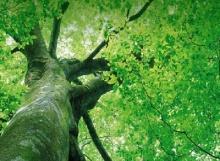 บทเรียนชีวิตจากต้นไม้