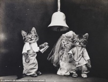 ภาพถ่ายเรโทรยุคก่อนอินเตอร์เน็ต จับหมา-แมวแต่งตัวสุดแสนน่ารัก