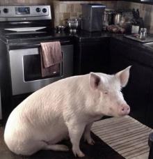น้องหมูผู้น่ารักทำให้คนเลี้ยงเลิกทานเนื้อสัตว์