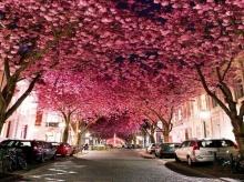 ฟิน! 10 อุโมงค์ต้นไม้ สุดงดงามระดับโลก