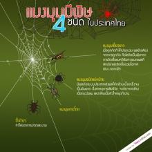 4 แมงมุมมีพิษในไทย อันตรายถึงชีวิต