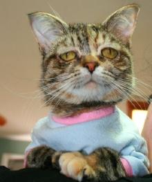 มาดู๊ มาดู 'ทัคเกอร์' แมวหน้าเศร้า อมทุกข์ แต่น่ารักเว่อรื