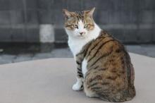 เกาะอาโอชิมะ สวรรค์ของคนรักแมว