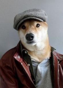 โบตี้ นายแบบหมาสุดฮอต