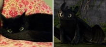 20 ภาพที่บอกว่า แมวไม่เหมือนแมว! แต่เหมือน...?