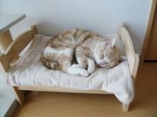 น่าร๊ากก! ทำเตียงเหมียวจาก เตียงตุ๊กตา
