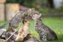 คู่รักช่างภาพทุ่มเวลา 5 ปี!! เพื่อถ่ายรูปแมวนับ 100,000 ในบัลติมอร์