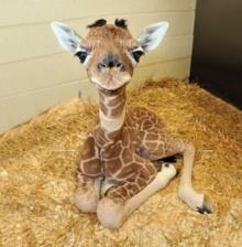 สุดน่ารัก!! 23 ภาพของ สัตว์แรกเกิด ที่คุณต้องหลงรัก!!