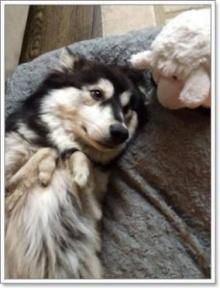 เหมือนเกิดใหม่!! เมื่อเจ้าสุนัขขาพิการได้รับขาใหม่