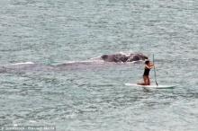 ระทึก! สาวโต้คลื่นหนีสุดชีวิต หลังแม่วาฬใหญ่ว่ายตาม