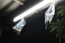 เจ๋งเวอร์! กำจัดแมลงเม่าง่ายๆ ด้วยถุงแกงและเทปกาว!