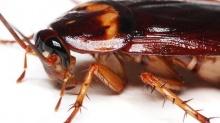 6 วิธีมาช่วยขับไล่เจ้าแมลงสาบตัวดี! ให้พ้นจากบ้านคุณ
