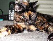 ตะลึงมาก! TIFFANY TWO! แมวที่อายุยืนที่สุดในโลก