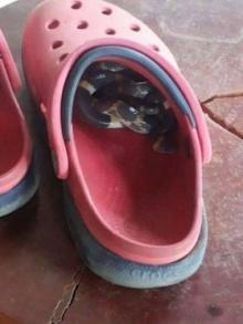 กรี๊ดดดด!!! ใส่รองเท้า แต่คับผิดปกติ เมื่อส่องดูถึงกับผงะ มันน่ากลัวม๊ากก!!!!