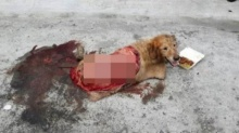 น้ำตาจะไหล!!! หมาตัวนี้ถูกรถชนจนหนังถลอก แต่มันก็ยังยิ้มสู้ให้ผู้คนอย่างเป็นมิตร