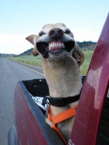 15 ภาพของเหล่าสุนัขสุดฮา ที่รักการ นั่งรถกินลม เป็นที่สุด!!