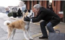 นี่คือ ฮาจิโกะ ยอดสุนัขผู้ซื่อสัตย์ ที่เป็นตำนานเล่าขานของชาวญี่ปุ่น