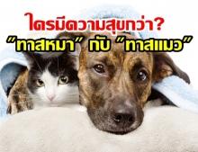 งานวิจัยหมาๆแมวๆ ชี้เจ้านายสุนัขแฮปปี้กว่าพวกทาสแมว