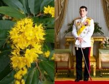 """รู้จัก """"ต้นรวงผึ้ง"""" Yellow Star ต้นไม้ประจำพระองค์ รัชกาลที่ 10"""