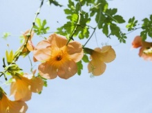 หักหอกเป็นดอกไม้