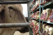หยุดกินเนื้อวัวกันเถอะ เพื่อชีวิตที่ดี