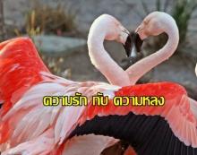ธรรมะสอนใจ ความรัก กับ ความหลง
