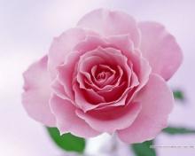 ดอกไม้กับการปฏิบัติธรรม