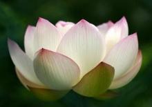 ความหมายของ ธูป เทียน ดอกไม้