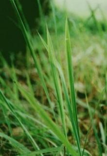 ปริศนาแห่งหญ้าคา 8 กำ
