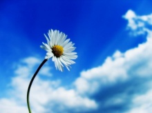 จิตใสไร้ทุกข์...ทำจิตให้สงบ ทำใจให้สบาย