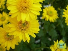 จิตงดงาม ดอกไม้งาม