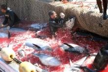 กรรมที่ทุบหัวปลา